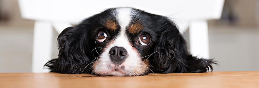 apprendre son chien a ne pas aboyer