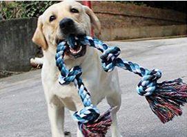 corde pour votre chien