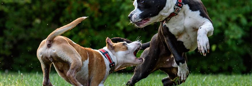Chiens jouent dans un parc à canin