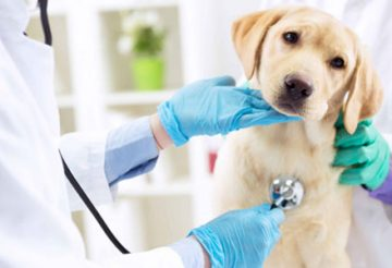 Trouver un vétérinaire de garde à Toulouse
